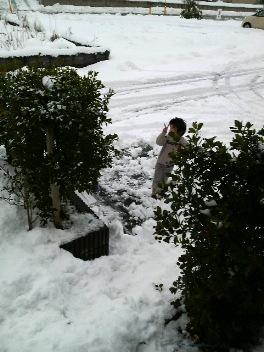 雪かき頑張ってます